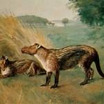 Фенакодус (Phenacodus) — один из поздних представителей кондиляртр, живший в эоценовую эпоху (56–40 млн лет назад). Картина Чарльза Найта (Charles R. Knight), 1898 г.