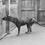 Хобарт фото сделано в 1933 году