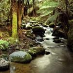 Природа на острове Тасмания