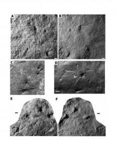 Обнаружено древнейшее животное со скелетом